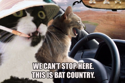 This is bat country!
