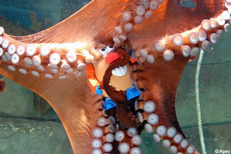 2008-01-11-octopus.jpg